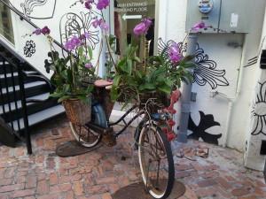 OrchidBike